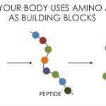 Essential And Non Essential Amino Acid